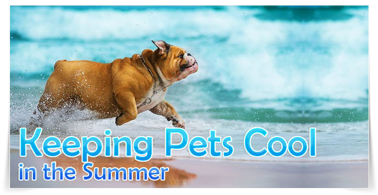 KEEP YOUR PETS COOL THIS SUMMER ReShip.com Blog