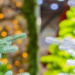 Douglas Fir vs Artificial, the Perfect Christmas Tree